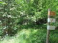 Visite du jardin écologiquedu Jardin des Plantes.jpg