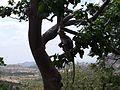 WHAT,S UPP^KADIRI AP - panoramio.jpg