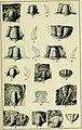 Walcott Cambrian Geology and Paleontology II plate 15.jpg