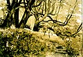 Wald-Warnicken.jpg