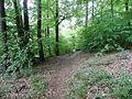 Waldweg - panoramio (13).jpg