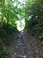 Walk - panoramio (16).jpg