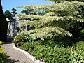 Walled garden - geograph.org.uk - 526031.jpg