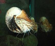 Nautilus Pompilius - Подъем