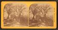 Washington Street, by Lewis, T. (Thomas R.), d. 1901 4.png
