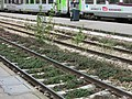 Weeds on the rail tracks of the gare de Paris-Saint-Lazare.jpg