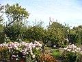 Werder - Kleingarten (Smallholdings) - geo.hlipp.de - 28526.jpg
