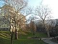 Wiener Naturdenkmal 457 und 620 - 2 Platanen und eine Sommerlinde (Döbling) c.JPG