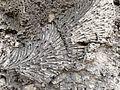 Windley Key fossil 4.JPG