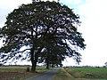 Wolf Lane, Gorefield - geograph.org.uk - 1538063.jpg