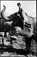 Woman standing on elephant's leg (6537939043).jpg