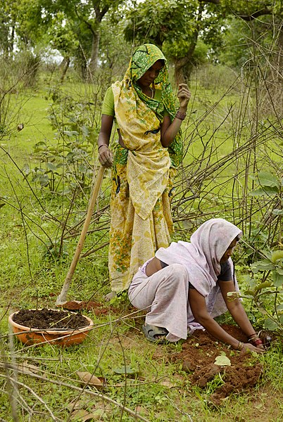File:Women planting a tree, Umaria district, MP, India.jpg
