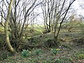 Woodland Burn - geograph.org.uk - 379332.jpg
