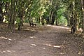 Woodland path - Cosmeston Lakes - geograph.org.uk - 1481232.jpg