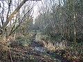 Woodland track - geograph.org.uk - 1123259.jpg