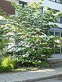 Wzwz tree 01a.jpg