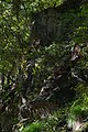 Yagyu Kaidō Takisaka Jizo 20141001.jpg