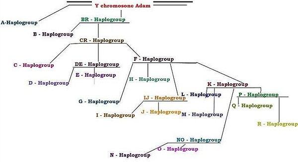 Ychromosomal Adam on Revolvycom