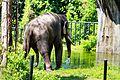 Zoo Negara (24654560219).jpg