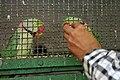 Zoo of Ahmedabad, India (4052661954).jpg
