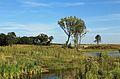 Zwin Natuurpark R06.jpg