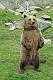 Ähtärin karhut 5.jpg