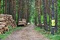 Ścinka drzew Lasy okuniewsko-rembertowskie Nadleśnictwo Drewnica.jpg