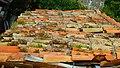 ŽIJÚCA STRECHA - LIVING ROOF - panoramio.jpg