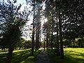 Аллея парка в парке культуры и отдыха им. С. Лазо.JPG