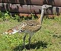 Бердянский зоопарк 097.jpg
