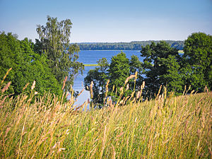 Lake Rychy - View to the lake from Belarus side