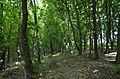 Городище (пам'ятка природи, Германівська сільська рада) 01.jpg