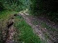 Дарога ў Панарскім лесе (Panerio miškas, Zuikių gatvė) - panoramio.jpg