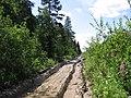 Дорога в лесу - panoramio (7).jpg