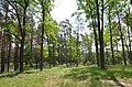 Дуби (пам'ятка природи), Пісківська селищна рада.jpg