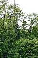 Западная часть парка Нивки. Фото 25.jpg