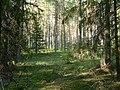 Заполье, лес - panoramio.jpg