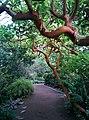Земляничное дерево или Дерево курортница. Субтропический маршрут.jpg