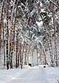 Зима в Серебряном Бору.jpg