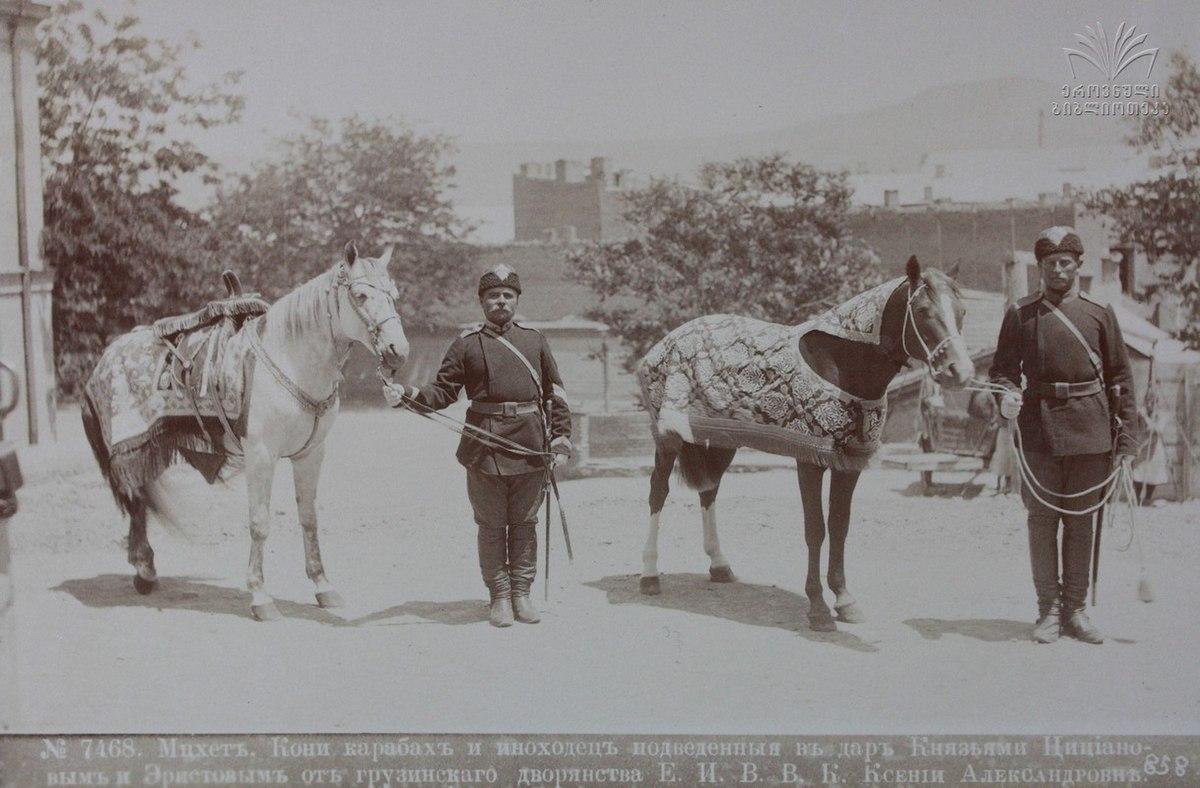 Иноходь и Карабахская лошадь.jpg
