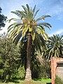 Канарский ботанический сад Виера-и-Клавихо 3.jpg