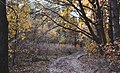 Лісова дорога в заказнику Михайловичі.jpg