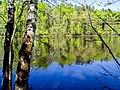 Озеро Подборное весной.jpg