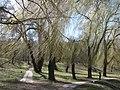 Парк «Нивки» (східна частина) IMG 5212.jpg