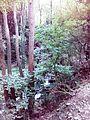 Смоларски водопад 38.jpg