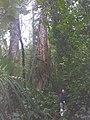 อุทยานแห่งชาติ แม่วงก์ - panoramio (9).jpg