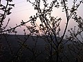 日出東山 - panoramio.jpg