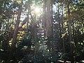 栂尾山高山寺金堂 - panoramio (2).jpg