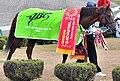 第14回JBCクラシックの優勝レイと馬着を装着した勝利馬コパノリッキー.JPG