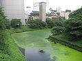 緑色 (2869333240).jpg
